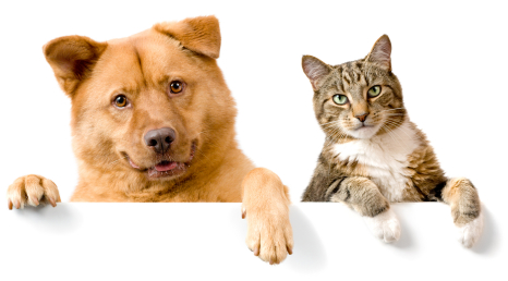 Some distinct personality traits of Cat and dog people…
