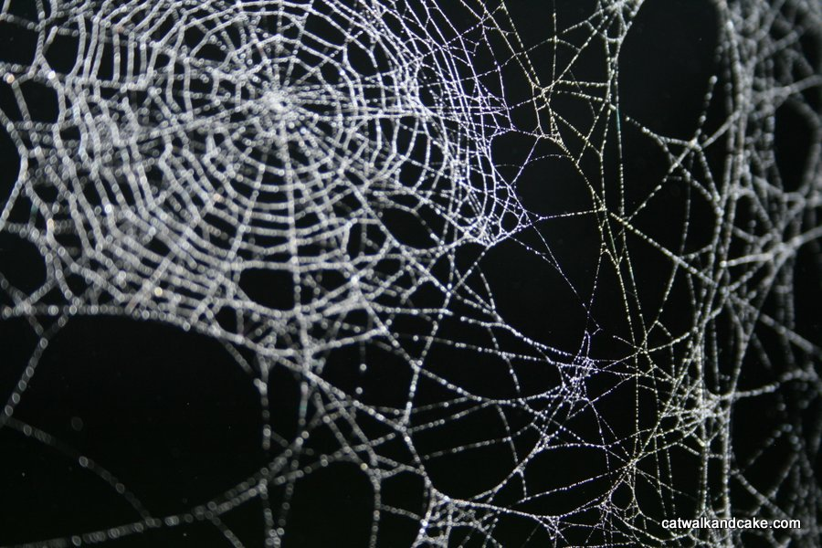 Cobwebs (Poem)